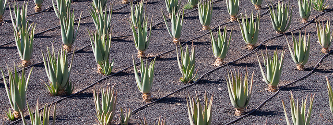 Aloe di Creta juice